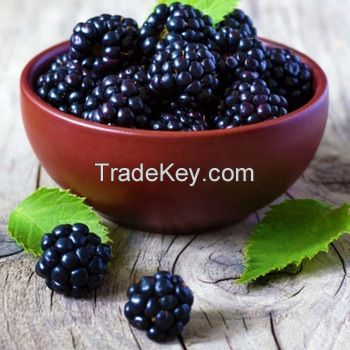 Dried Blackberry Fruit