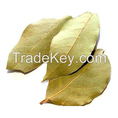 Best Quality Bay Leaf