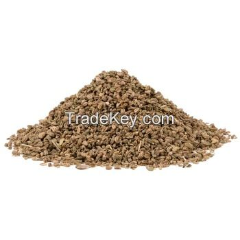 Celery seeds For Good Price