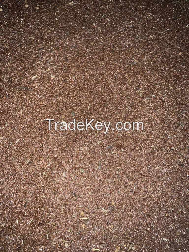 oilseed flax