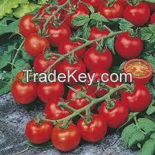 Natural Tomato Juice 100% NO SUGAR ADDED