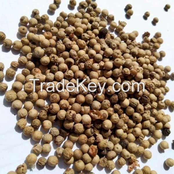 Muntok White Pepper Grade C (SNI II)