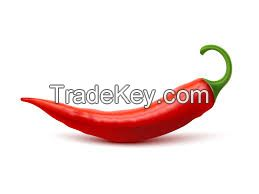 Hot Chilli Peppers (Cayenne Peppers)