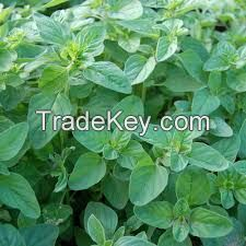 best quality oregano powder