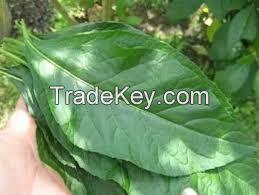 Fresh Dried Bitter Leaf