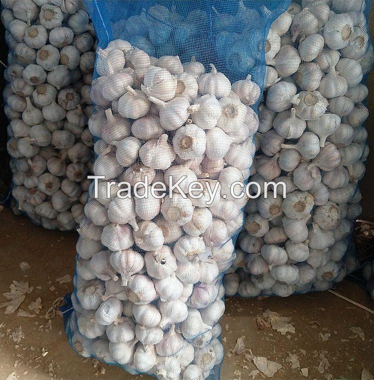 Fresh White Galic /Red Garlic