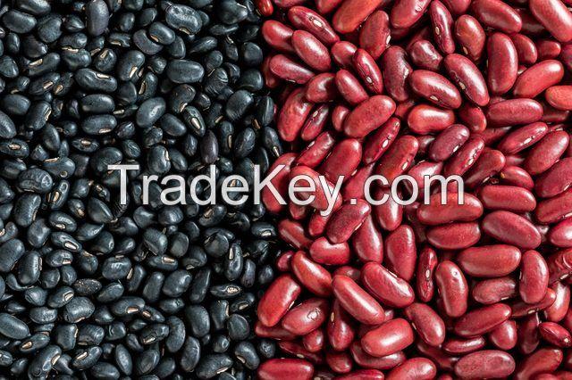 Organic Dark Red kidney bean