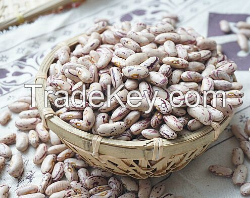 Light/Red Speckled Sugar Beans in Premium Quality for Sale