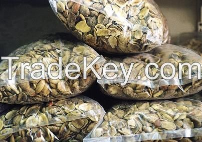 Afican Bush mango seed extract (Irvingia Gabonesis), Powder and Oil