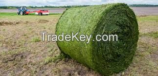 alfalfa hay for sale