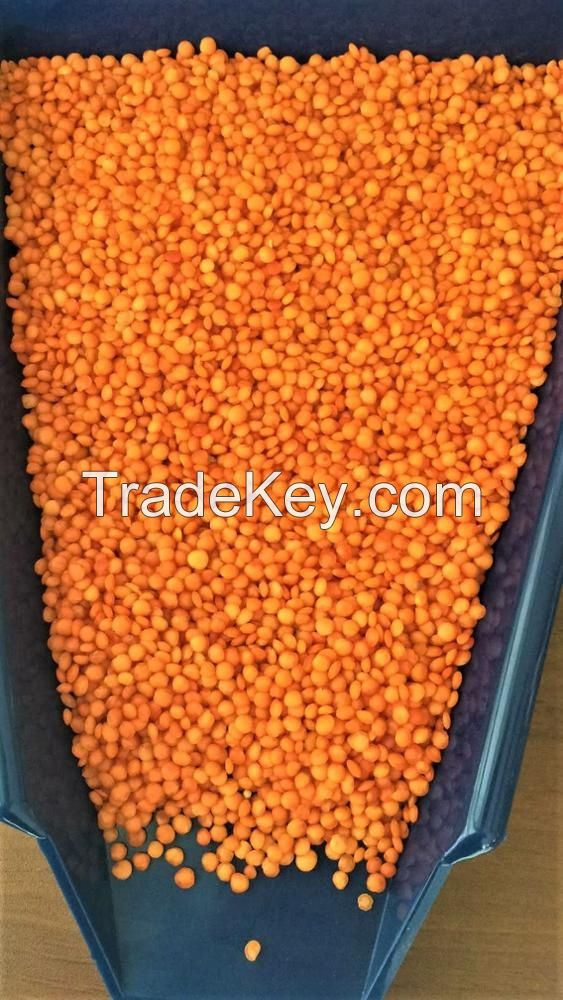 Red Lentils/ Canada Red Lentils / Red Split and Football Red type Red Lentils