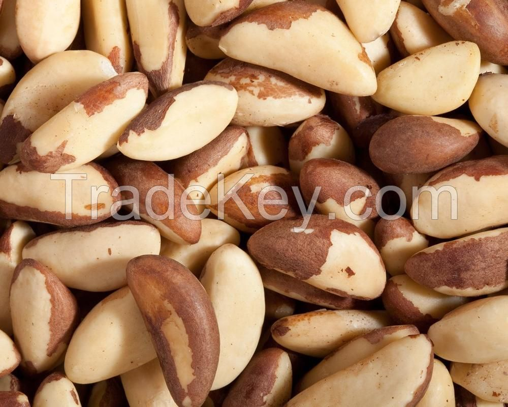 Dried/Raw/Roasted Brazil Nuts