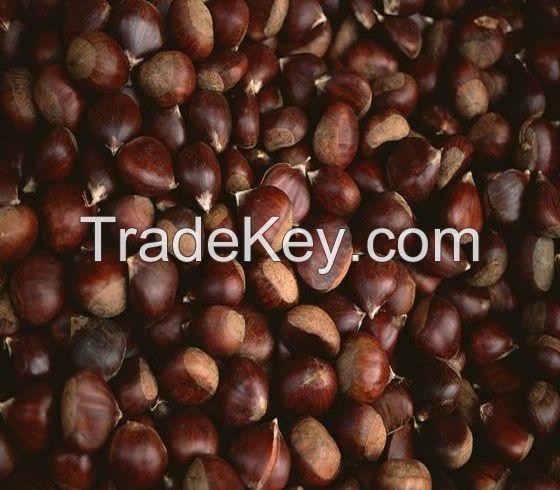 100% Top quality fresh chestnuts/organic chestnuts