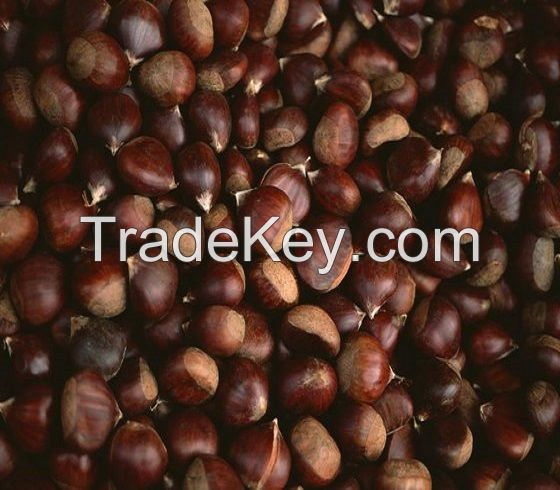 Organic Fresh Bulk Chestnuts For Sale