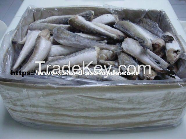 Hake Fish, Fresh hake fish, frozen hake fish