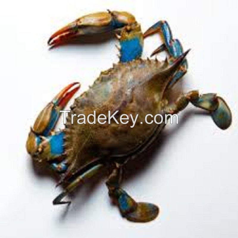 Crab, Fresh Crab, Frozen Crab, Live Mud Crabs, Red King Crabs, Soft Shell Crabs