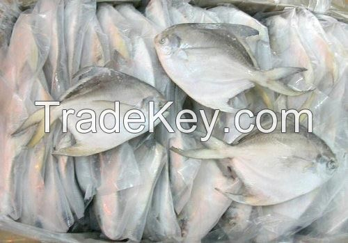 Fresh and frozen fish