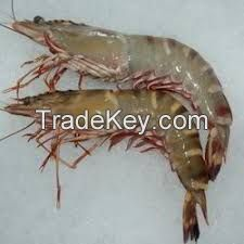 Live and frozen shrimps and lobsters
