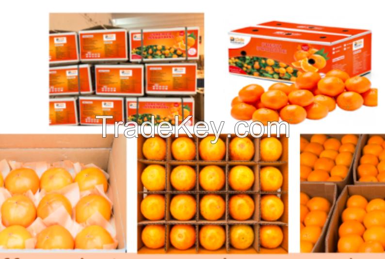 Fresh fruit delicious oranges for sale Fresh Navel Orange