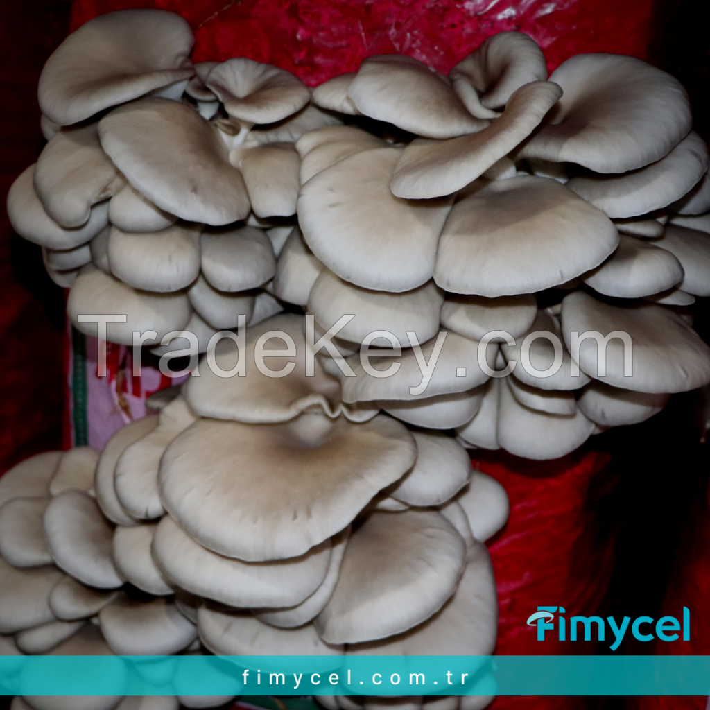 Mushroom mycelium spawn