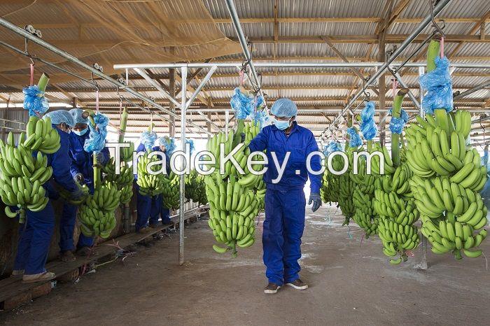 BANA HAGL Bananas