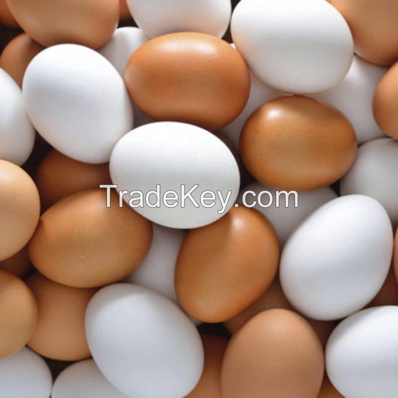 Fertile Broiler / Chicken Hatching Eggs for Sale
