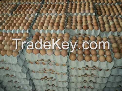 Fresh Farm Chicken Table Eggs/Fresh Chicken wholesale