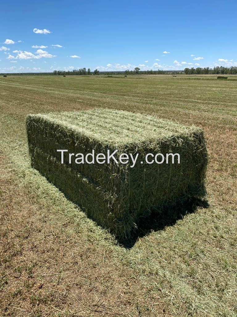 Alfalfa Lucerne Hay for sale