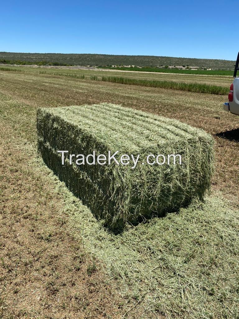 Alfalfa Lucerne Hay for sale