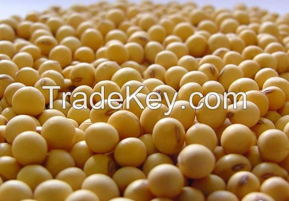 premium quality soya beans