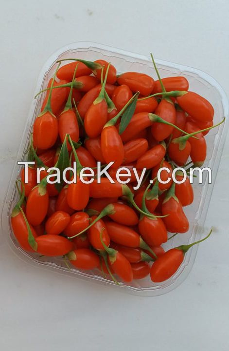 Fresh and Frozen Greek Goji Berries