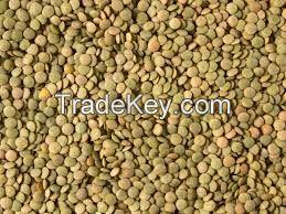 Green Lentils Grade A Top Quality Green Lentils In Bulk Lentils Manufacturers