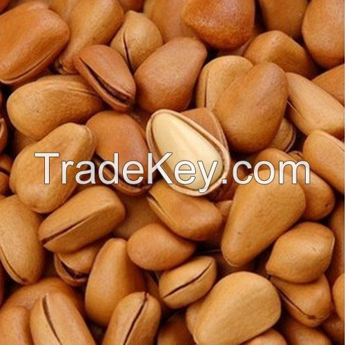 100%Pure Natural Wild Pine Nuts Edible Nuts