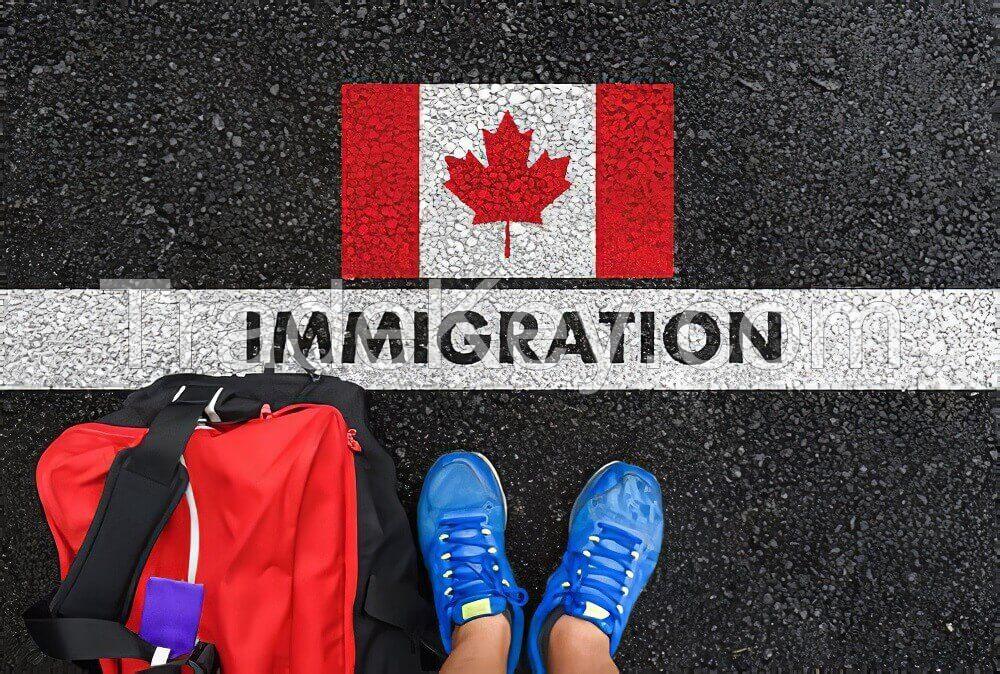 Ace Migration Service