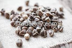 Moringa stenopetala - Moringa seeds