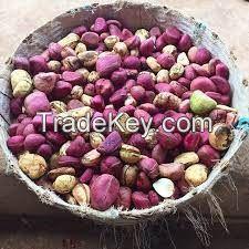 Kola Nuts - Bitter