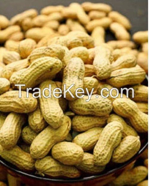 Peanut, Ground nut