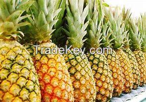 Fresh Orange, Bananas, Mangos, Melon, Lemon, Guava, Grapes, Avocados