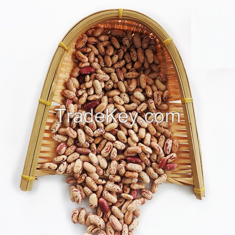 Sparkle kidney Beans