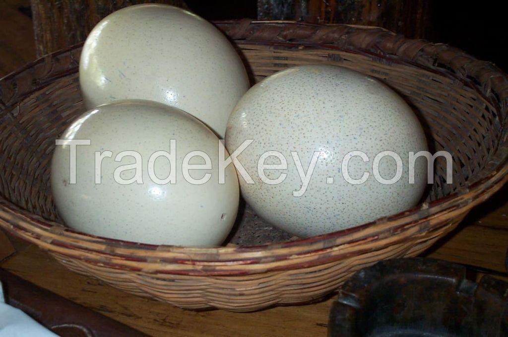 Ostrich Eggs, Ostrich Chicks, Matured Ostrich