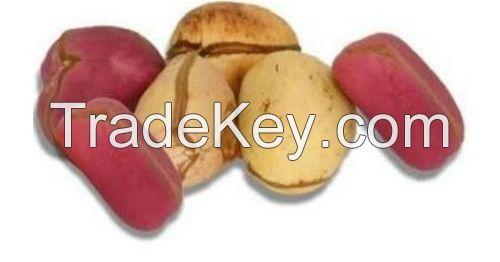 Dried Kola Nuts