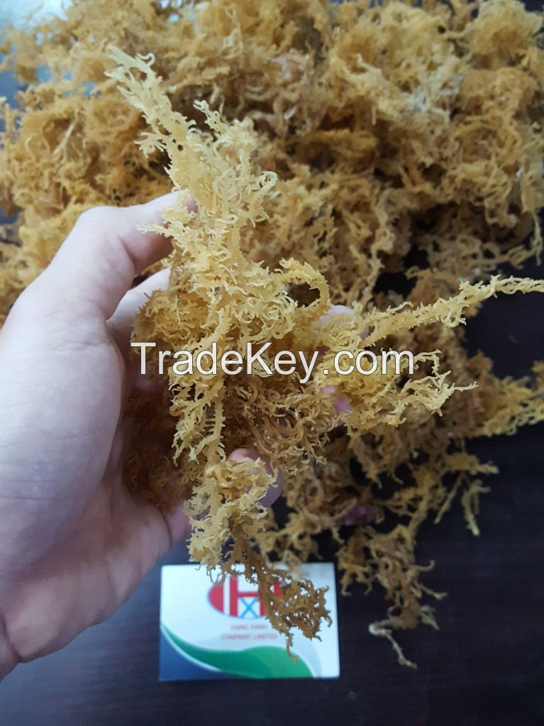 Dried Sea Moss with high quality and a reasonable price, dired sea food