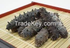 Selling Best Quality Japanese Dried Sea Cucumber