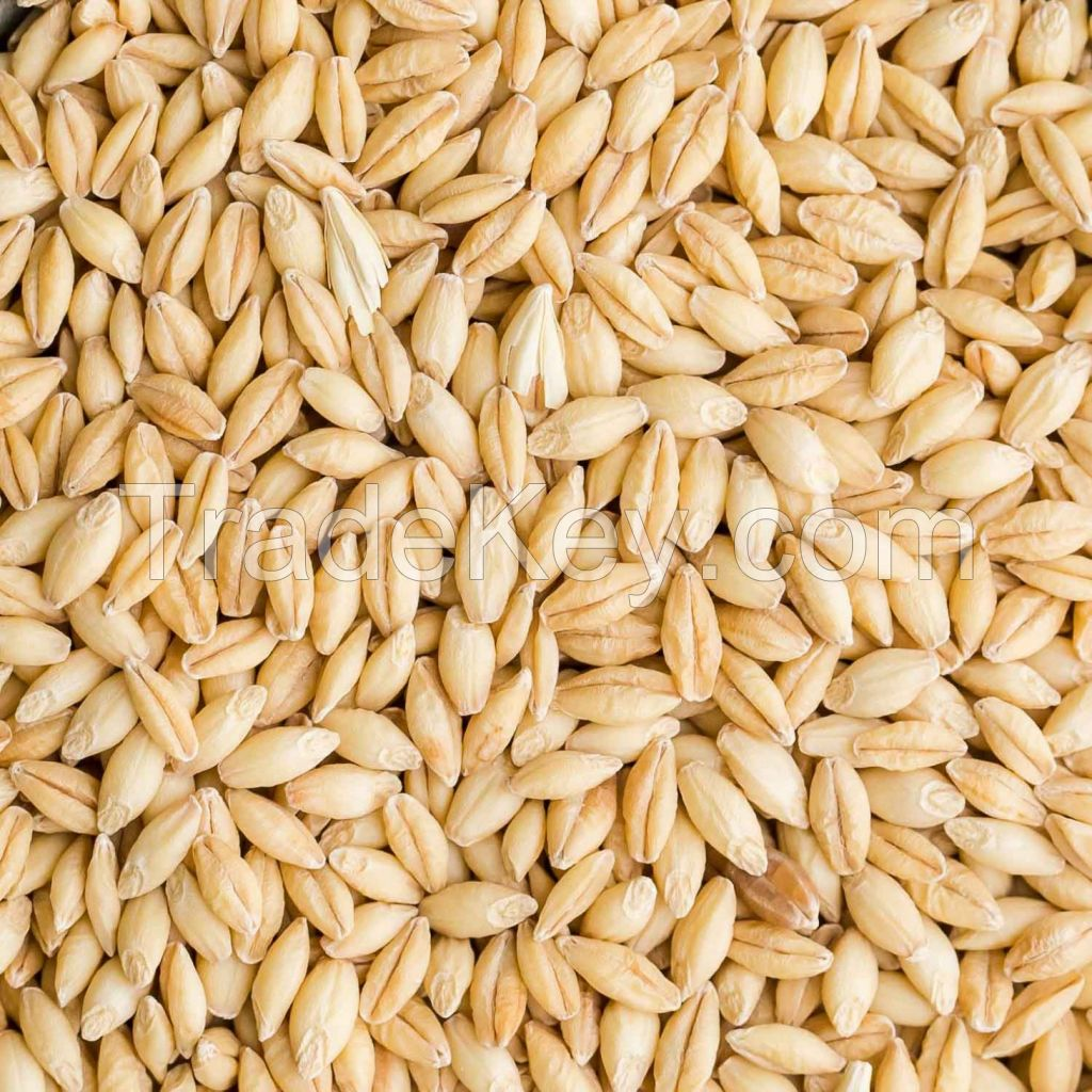 Corn, wheat, barley, peas