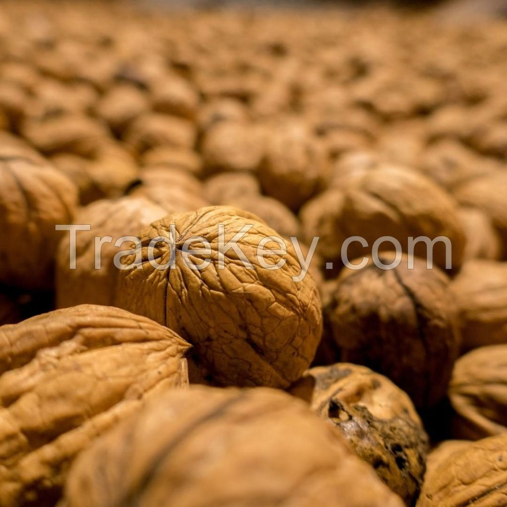 Organic Walnuts Wholesale Shelled with High Quality Walnuts Chandler Shelled Extra Light Halves Walnuts