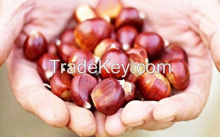 Wholesale fresh Chestnut Raw easy peel sweet roasted chestnuts organic snack food