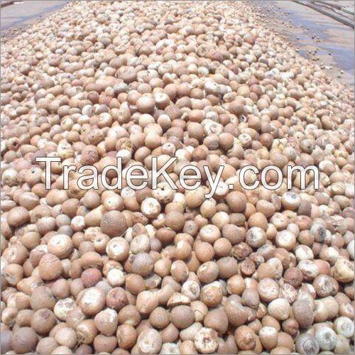 BETEL NUTS ( Cuts , Uncut, Coin, 90/95 80/85 70/75 )