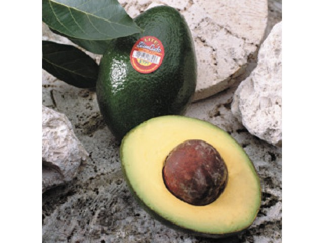 Avocados Semil 34