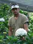 growers and exporters of fresh cut flowers in south america