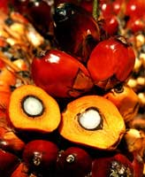 Crude Palm Oil, palm oil supplier, palm oil exporter, palm oil manufacturer, palm oil trader, palm oil buyer, palm oil importers